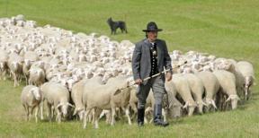 salmo23-pastor-e-ovelhas